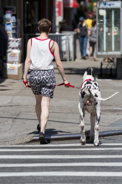 image of a woman in shorts taking herdog out for a walk, people really do look like their dogs